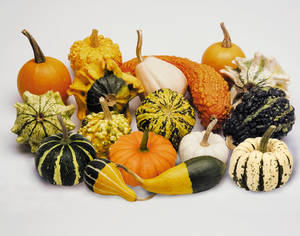 Gourds Ornamental Small Fruited Sorts Seeds 1 95 From Chiltern Seeds