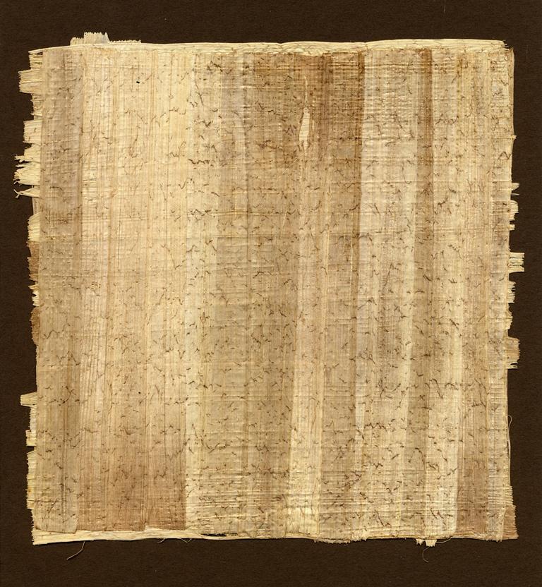 Papyrus Paper Cyperus papyrus Seeds ...