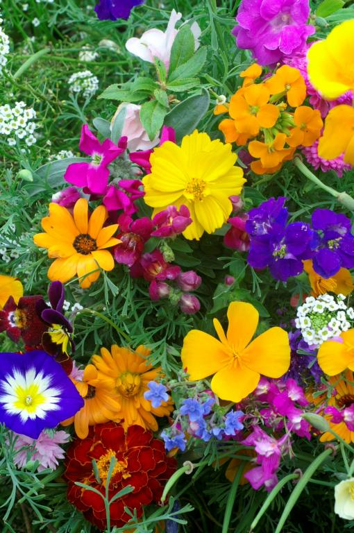 Image result for mixture of annual flowers